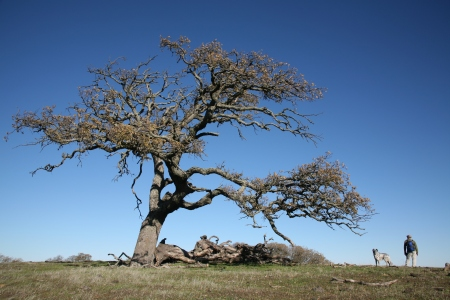bonsai on the ridge