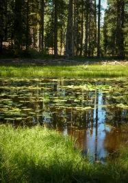 trailside pond